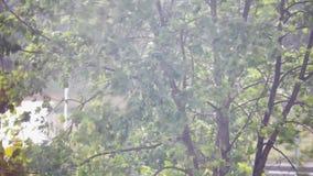 De bladeren van de boom schudt de wind en de regen stock video