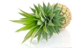 De bladeren van de ananas op witte achtergrond Stock Afbeeldingen