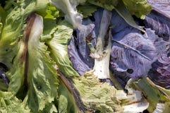 De bladeren van de andijvie en van de kool Stock Foto's