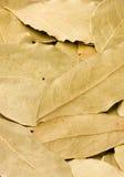 De bladeren van de baai Stock Afbeelding