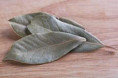 De bladeren van de baai Royalty-vrije Stock Foto