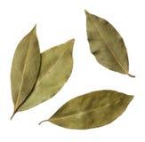 De bladeren van de baai Royalty-vrije Stock Afbeeldingen