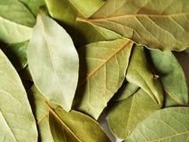 De bladeren van de baai voor het koken Stock Foto's