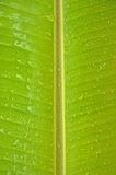 De bladeren van de banaan Royalty-vrije Stock Afbeelding