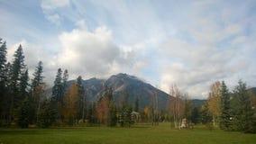 De bladeren van de Banffherfst op het gras Royalty-vrije Stock Afbeelding