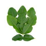 De bladeren van de bergamot. royalty-vrije stock afbeelding