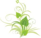De bladeren van de berk met bloemenornament Stock Afbeelding