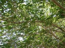 De bladeren van de boom Royalty-vrije Stock Afbeelding