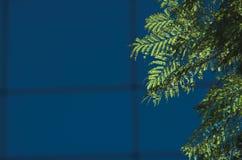 De bladeren van de boom met glas de bouwachtergrond Royalty-vrije Stock Afbeelding