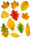 De bladeren van de daling Royalty-vrije Stock Afbeelding