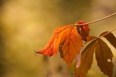 De bladeren van de daling Royalty-vrije Stock Foto's