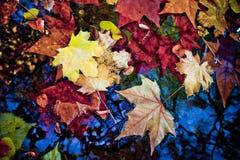 De bladeren van de daling Royalty-vrije Stock Afbeeldingen