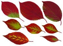 De bladeren van de daling Stock Foto