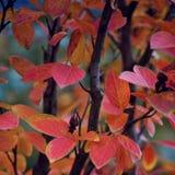 De bladeren van de daling Royalty-vrije Stock Fotografie