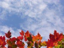 De bladeren van de daling Stock Afbeeldingen