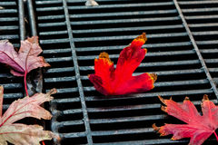 De bladeren van de daling Stock Afbeelding