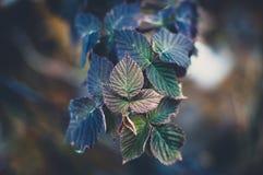 De bladeren van de daling Stock Foto's