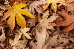 De bladeren van de daling Royalty-vrije Stock Foto