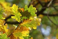De bladeren van de daling in bos Stock Fotografie