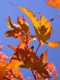 De bladeren van de daling in de hemel Stock Foto's