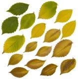 De bladeren van de daling die op wit worden geïsoleerdn stock fotografie