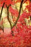De Bladeren van de daling in een bos royalty-vrije stock afbeelding