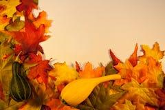 De Bladeren van de daling met Pompoenen Stock Fotografie