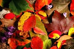 De bladeren van de daling no.2 Royalty-vrije Stock Afbeeldingen