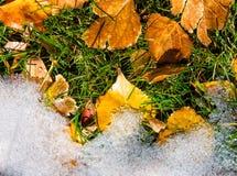 De bladeren van de daling ontmoeten de wintersneeuw Stock Fotografie