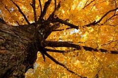 De bladeren van de daling op een boom Stock Afbeeldingen