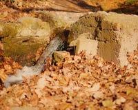 De bladeren van de daling op grond Royalty-vrije Stock Afbeelding