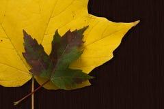 De bladeren van de daling op Hout Stock Foto's
