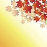 De bladeren van de daling op oranje achtergrond Royalty-vrije Stock Fotografie
