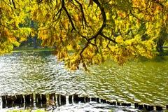 De bladeren van de daling over water Stock Fotografie