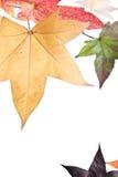 De Bladeren van de Daling van de herfst Royalty-vrije Stock Foto's