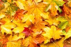 De bladeren van de daling voor een de herfstachtergrond Stock Afbeeldingen
