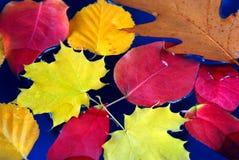 De bladeren van de daling in water Royalty-vrije Stock Foto