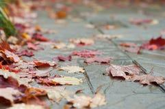 De bladeren van de dalingsherfst op terrassteen Royalty-vrije Stock Foto