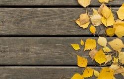 De bladeren van de de herfstberk en pijnboomnaalden op een houten achtergrond Royalty-vrije Stock Foto