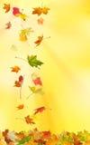 De bladeren van de de herfstesdoorn Royalty-vrije Stock Afbeelding