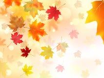 De bladeren van de de herfstesdoorn Illustratie stock illustratie