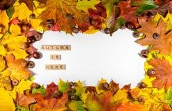 De bladeren van de de herfstesdoorn over witte achtergrond met de Herfst is hier tekst Exemplaarruimte voor bericht Stock Afbeelding
