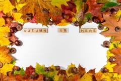 De bladeren van de de herfstesdoorn over witte achtergrond met de Herfst is hier tekst Exemplaarruimte voor bericht Royalty-vrije Stock Fotografie