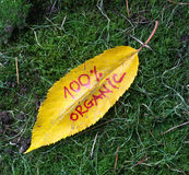 De bladeren van de de herfstokkernoot met met de hand geschreven teksten Royalty-vrije Stock Foto