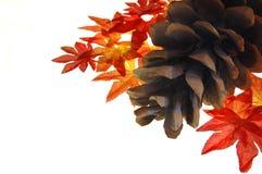 De bladeren van de denneappel en van de daling Royalty-vrije Stock Fotografie