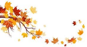 De bladeren van de esdoorn vector illustratie