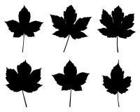 De bladeren van de esdoorn Royalty-vrije Stock Afbeeldingen