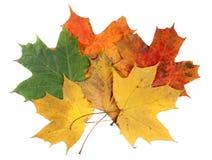 De bladeren van de esdoorn Royalty-vrije Stock Afbeelding