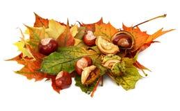 De bladeren van de esdoorn en kastanjes #3 Stock Fotografie