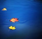 De bladeren van de esdoorn op water Royalty-vrije Stock Afbeeldingen